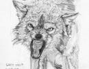 js57_wolf_110709
