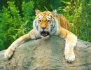White Lion 2
